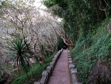Einer der Wege ist von Frangipanibäumen gesäumt.