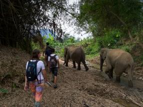 Im Tal wittern die Elefanten weiteres Futter!