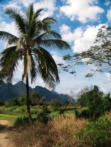 Chillen unter Palmen und blauen Himmel