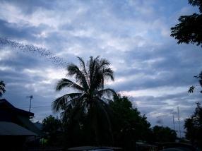 ... auf die Millionen Fledermäuse, ...
