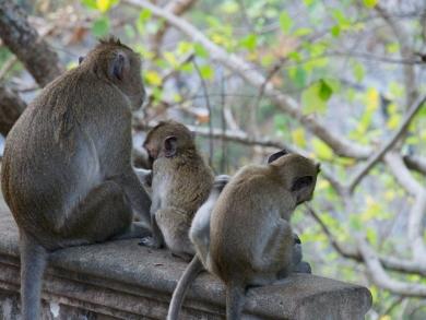 Viele Affen Leben auf dem Berg