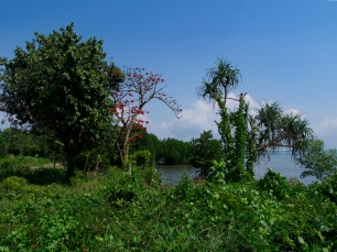 Dschungel am Meer