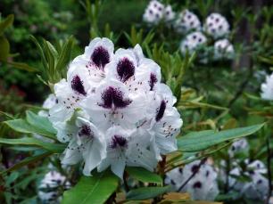 Prächtige Blumenbeete findet man in allen Teilen der Gartenanlage