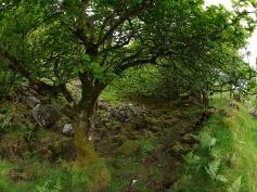 Knorrige Bäume sorgen für eine ganz eigene Stimmung.